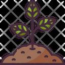 Sprout Tree Joshua Tree Icon