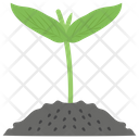 Sprout Plant Growing Plant Icon