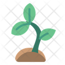 Sprout Plant Seed Icon
