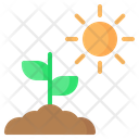 Sprout Plant Sun Icon