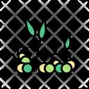 Sprouts Peas Color Icon