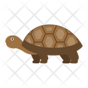 Spurred Tortoise Icon