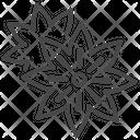 Star Anise Staranise Illicium Verum Icon