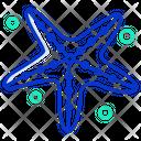Starfish Icon
