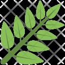 Stem Green Leaves Icon