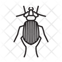 Stink Bug Bug Insect Icon