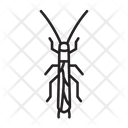 Stonefly Bug Insect Icon