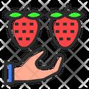 Strawberry Picking Strawberry Food Icon