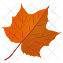 Sugar Maple Icon