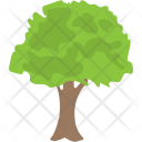 Sugar Maple Oak Icon