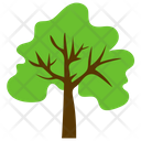 Sugarberry Tree Icon