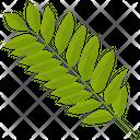 Ash Leaf Sumac Leaf Leaf Icon