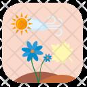Sun Summer Flower Icon
