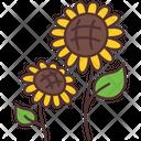 Sun Flower Icon