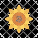 Sunflower Bloom Nature Icon