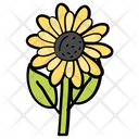 Flower Sunflower Nature Icon