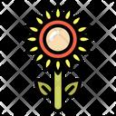 Sunflower Plant Flower Icon