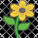 Sunflower Flower Nature Icon
