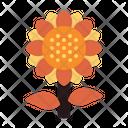 Sunflower Plant Autumn Icon