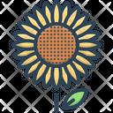 Sunflower Girasol Helianthus Icon