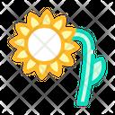 Sunflower Plant Color Icon