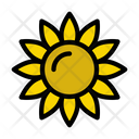 Sunflower Blossom Springs Icon