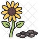Sunflower Food Organic Icon
