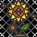 Sunflower Organic Seeds Icon