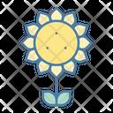 Sunflower Blossom Flower Icon