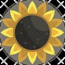 Thanksgiving Sunflower Flower Icon