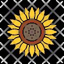 Sunflower Flower Chrysanthemum Icon