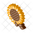 Sunflower Seeds Icon