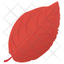 Sweet Birch Leaf Autumn Leaf Icon