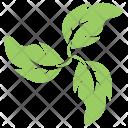 Swirl Leaves Icon