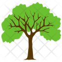 Sycamore Tree Foliage Icon
