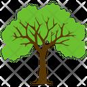 Sycamore Tree Icon