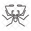 Tailless Whip Scorpion Bug Insect Icon