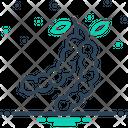 Tamarind Bean Tree Sour Icon