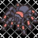 Tarantula Hairy Spiders Theraphosidae Icon