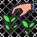 Tea Plant Tea Plant Icon
