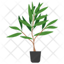 Tea Tree Plant Icon