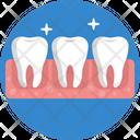 Human Anatomy Teeth Molars Icon