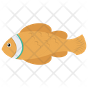Tench Fish Chum Salmon Icon