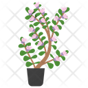 Thyme Potted Plant Icon