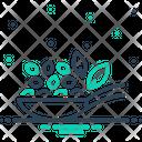Thymol Seed Thymol Seed Icon