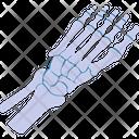 Skeleton Toe Anatomy Icon