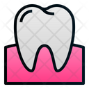 Tooth Gum Molar Icon