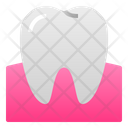 Tooth Gum Molar Icon