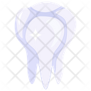 Tooth Healthy Tooth Human Tooth Icon