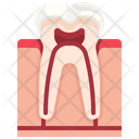 Tooth Organ Body Part Icon